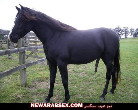 أزباب الخيول