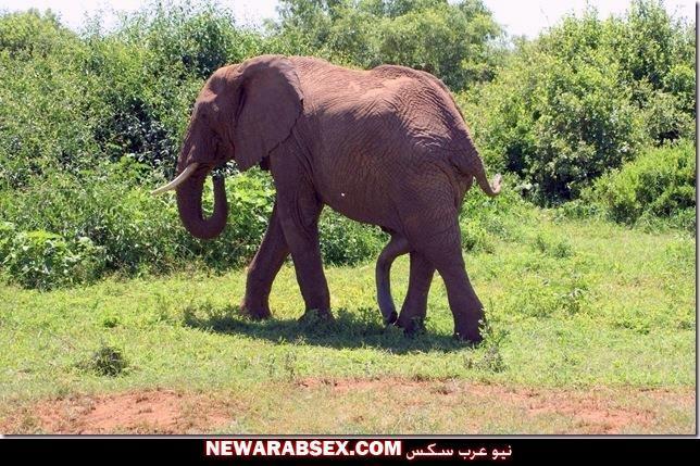 اير الفيل