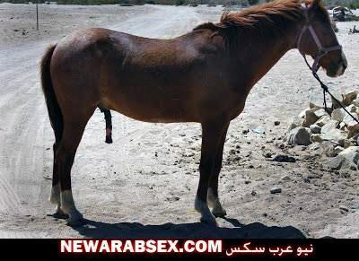 زب الحصان وهو واقف