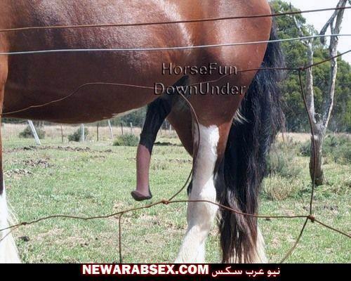 صورة لزبر الحصان