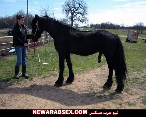 عير حصان